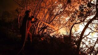 Τουρκία: Έξι νεκροί από τις δασικές πυρκαγιές - Απειλούν την Αλικαρνασσό οι φλόγες
