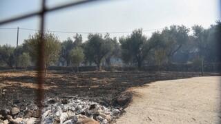 Αλμυρός Μαγνησίας: Υπό μερικό έλεγχο η φωτιά στην περιοχή Κωφοί