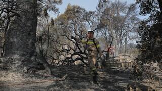 Φωτιά Αχαΐα: Κάηκε μεγάλο τμήμα της κοινότητας Ζήρια - Σοβαρές ζημιές καλλιέργειες