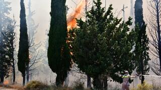 Πυρκαγιά στην Κοτρωνιά Σουφλίου: Επιχειρούν επίγειες και εναέριες δυνάμεις