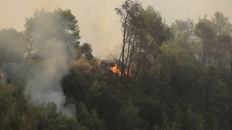 Καλαμάτα: Φωτιά στην περιοχή Βασιλίτσι - Εντολή για προληπτική εκκένωση της κοινότητας