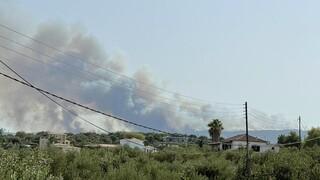 Καλαμάτα: Συνεχίζεται η κατάσβεση της φωτιάς στο Βασιλίτσι