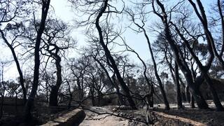 Φωτιά Αχαΐα: Δορυφορική εικόνα από τα χιλιάδες καμμένα στρέμματα