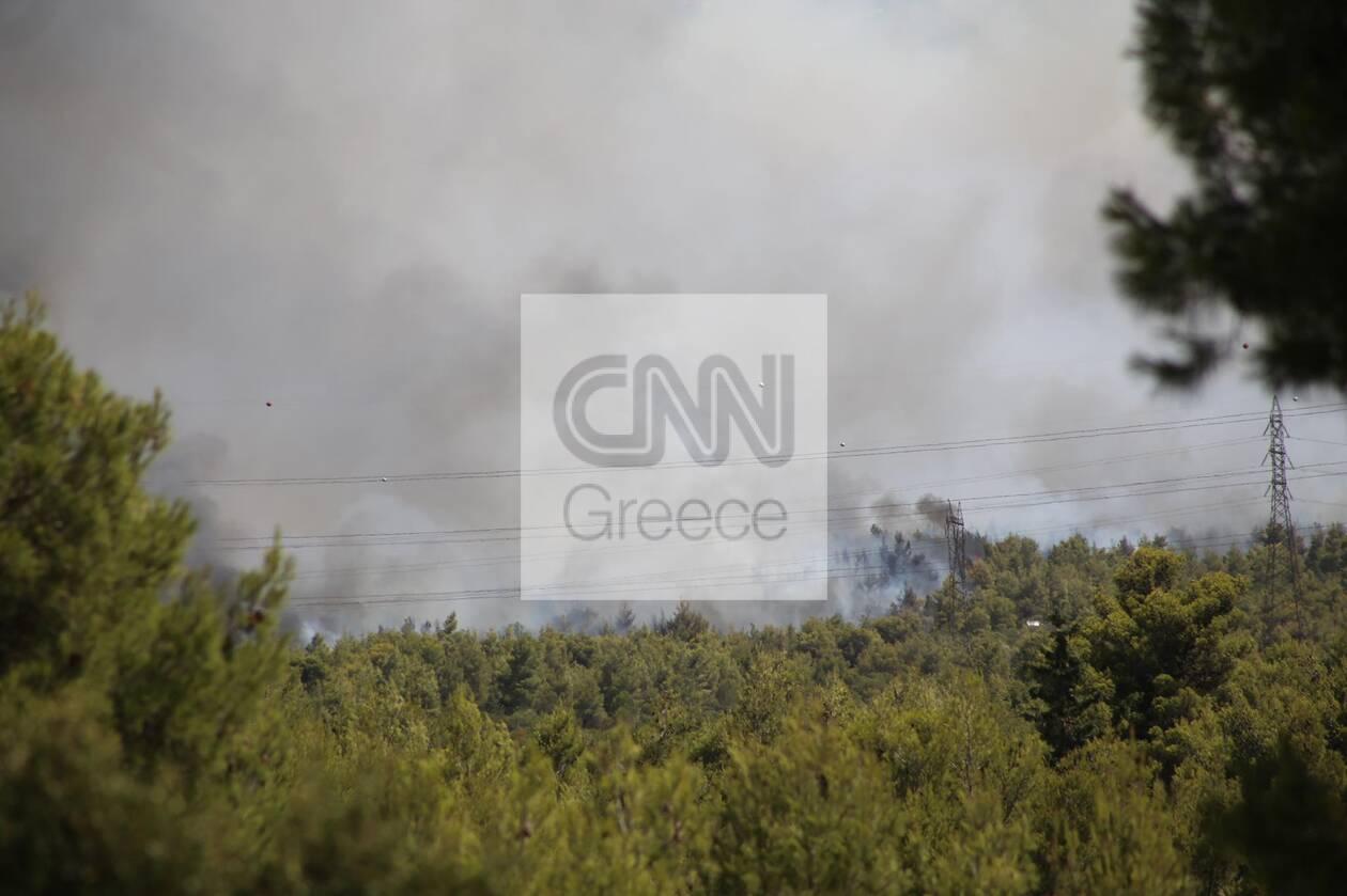 https://cdn.cnngreece.gr/media/news/2021/08/03/276641/photos/snapshot/fotia1.jpg