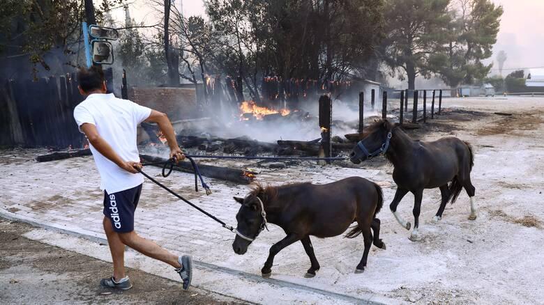 Φωτιά Βαρυμπόμπη: Απομακρύνονται τα άλογα από ιππικούς ομίλους της περιοχής