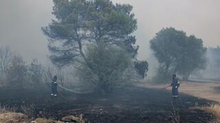 Μαίνεται ανεξέλεγκτη η φωτιά στη Λίμνη Ευβοίας - Σε επιφυλακή για εκκένωση οικισμών