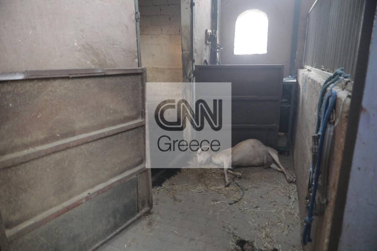 https://cdn.cnngreece.gr/media/news/2021/08/04/276701/photos/snapshot/fotia-attiki-2.jpg
