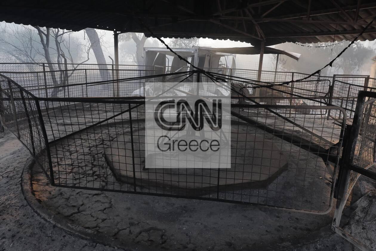https://cdn.cnngreece.gr/media/news/2021/08/04/276710/photos/snapshot/fotia-attiki-5.jpg