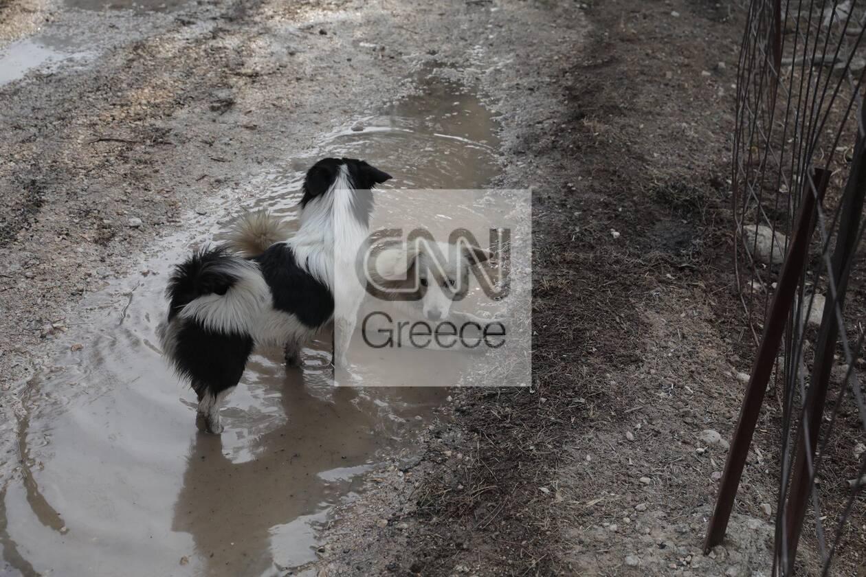 https://cdn.cnngreece.gr/media/news/2021/08/04/276710/photos/snapshot/varimpompi-141_58101224427788_n.jpg