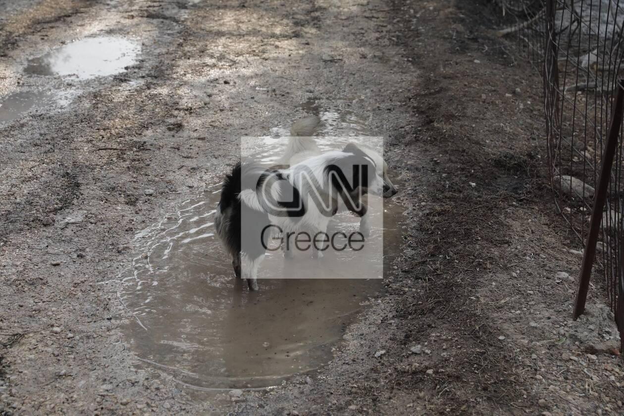 https://cdn.cnngreece.gr/media/news/2021/08/04/276710/photos/snapshot/varimpompi-331_2889036779249320904_n.jpg