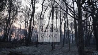 Βαρυμπόμπη: Εικόνες Αποκάλυψης μετά τη φωτιά - Σκελετωμένα δάση, νεκρά ζώα και καμένα σπίτια