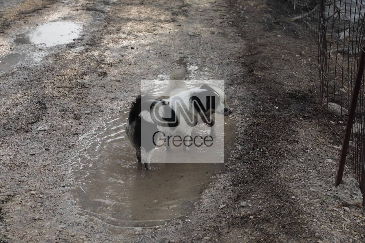 https://cdn.cnngreece.gr/media/news/2021/08/04/276746/photos/snapshot/varimpompi-331_2889036779249320904_n.jpg