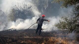 Φωτιά τώρα στις Καυκανιές της Αρχαίας Ολυμπίας