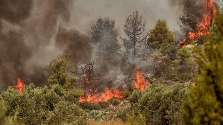 Πυρκαγιά από την Αλβανία πέρασε τα σύνορα στη Θεσπρωτία