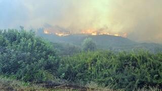 Δορυφορικές εικόνες των πυρκαγιών σε Εύβοια και Ηλεία
