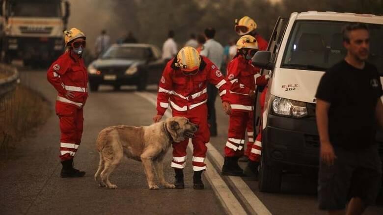 Φωτιά στη Βαρυμπόμπη: Ολονύχτια συνδρομή του Ελληνικού Ερυθρού Σταυρού στο μέτωπο