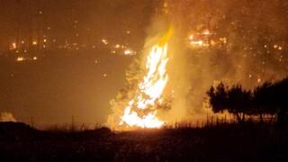 Φωτιά Εύβοια: Δύσκολη νύχτα στις Ροβιές - Κάηκαν σπίτια, εκκενώθηκε και η Σκεπαστή