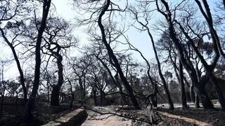 Σε κατάσταση έκτακτης ανάγκης κηρύχθηκαν οι πυρόπληκτες περιοχές της Αχαΐας