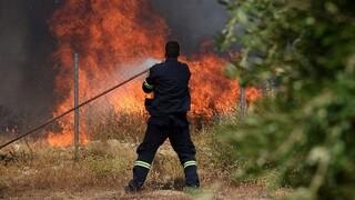 Φωτιά Αρχαία Ολυμπία: Εκκενώνονται και άλλοι οικισμοί - Τέσσερις τραυματίες