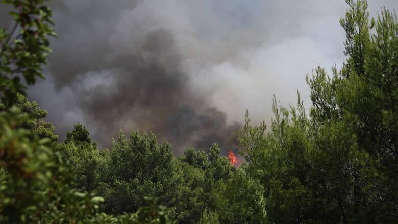Φωτιά Ρόδος: Αναζωπύρωση στην περιοχή Καλαμώνας