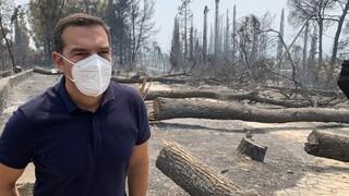 Τσίπρας από Εύβοια: Aναδασωτέες οι καμένες εκτάσεις για να μην ξεφυτρώσουν real estate επενδύσεις