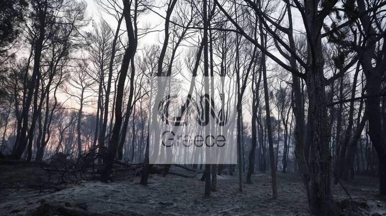 Φωτιά Βαρυμπόμπη: Οικονομική ενίσχυση από 600 έως 6.000 ευρώ στους πληγέντες της Αττικής