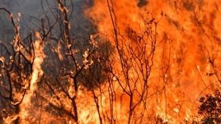Φωτιά Ηλεία: Στις φλόγες παραδόθηκαν περιουσίες στον Λάλα - «Κόκκινος» συναγερμός και την Παρασκευή