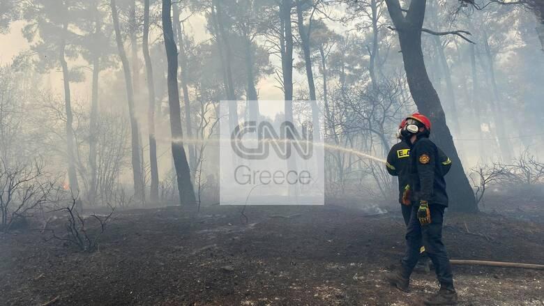 Φωτιές Αττική: Προσαγωγή ύποπτου «εθελοντή» στο Κρυονέρι