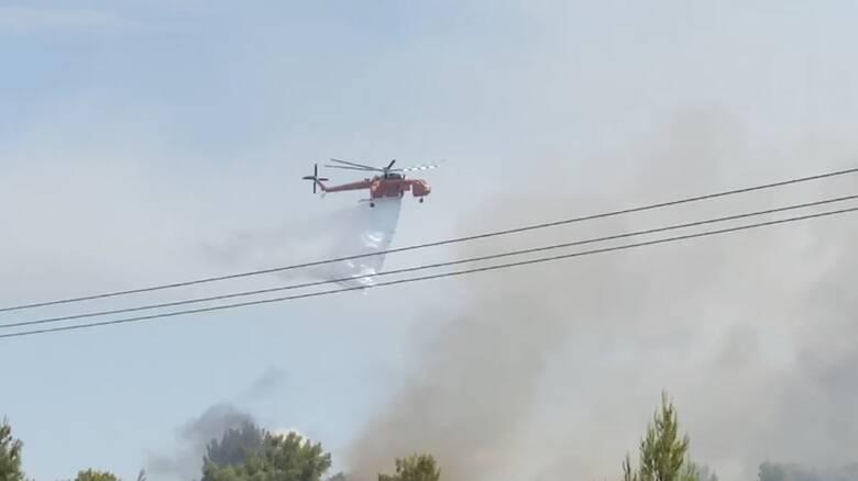 Φωτιά Θεολόγος: Αγώνας πυροσβεστικής και εθελοντών για να μη μπει η φωτιά στη Μαλεσίνα