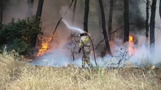 Φωτιές Αττική: Βελτιωμένη η εικόνα στα πύρινα μέτωπα - Διαρκής μάχη με τις αναζωπυρώσεις