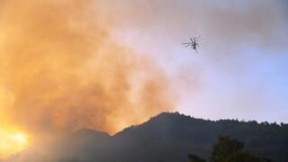 Φωτιά στην Ηλεία: Στις φλόγες η Νεμούτα, καίγονται σπίτια - Αναφορές για εγκλωβισμένους
