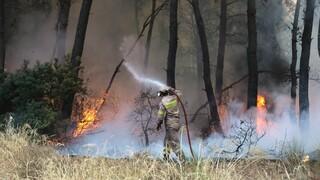 Φωτιά στην Ηλεία: Καλύτερη η εικόνα, «έσπασε» το ενιαίο μέτωπο - Ενισχύονται οι δυνάμεις
