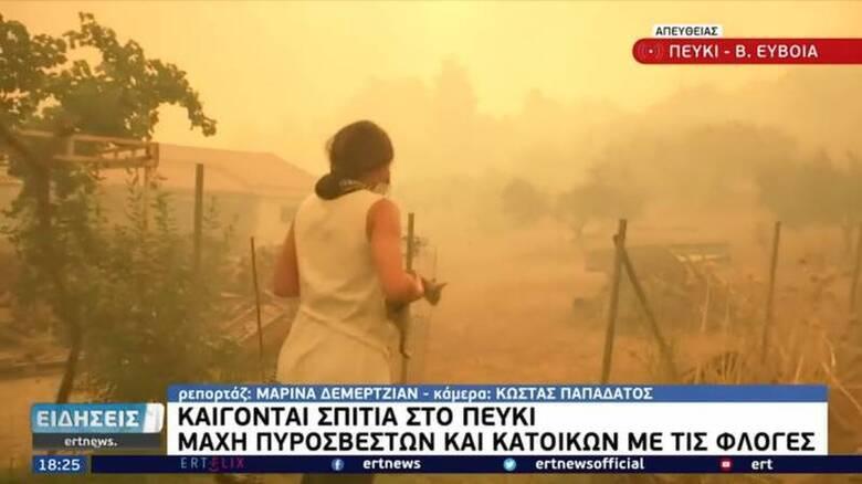 Φωτιά Εύβοια: Δημοσιογράφος της ΕΡΤ σώζει γατάκι από τις φλόγες στο Πευκί