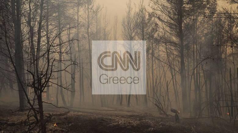 Φωτιά Εύβοια - Λέκκας: Μόνο 150.000 στρέμματα από τα 500.000 που κάηκαν μπορούν να αναδασωθούν