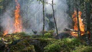 ΓΓΠΠ: Πολύ υψηλός κίνδυνος πυρκαγιάς για τη Ρόδο την Τετάρτη