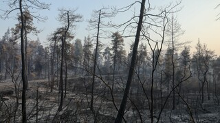 Επιστολή WWF στον πρωθυπουργό με 63.000 υπογραφές - Αίτημα η διάσωση των δασών