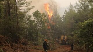 Πολιτική Προστασία: Πολύ αυξημένος κίνδυνος πυρκαγιάς και την Πέμπτη