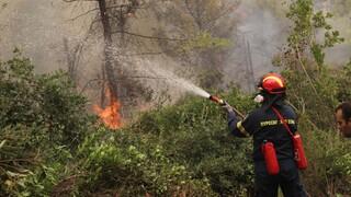 Φωτιά Αρκαδία: Συνεχείς αναζωπυρώσεις στη Γορτυνία - Ενισχύθηκαν οι άνεμοι