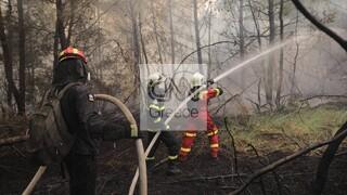 Φωτιά Ηλεία - Αρκαδία: «Μάχη» με αναζωπυρώσεις και διάσπαρτες εστίες σε Γορτυνία και Ολυμπία