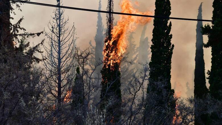 Φωτιές: Έξι εστίες σε Μάνδρα και Πόρτο Γερμενό λόγω κεραυνών
