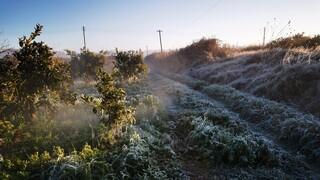 ΕΛΓΑ: Σήμερα η προκαταβολή αποζημιώσεων 36,5 εκατ. ευρώ σε αγρότες λόγω παγετού