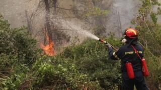 Φωτιά στην Αχαΐα: Οι φλόγες καίνε κοντά σε σπίτια στην Άρλα