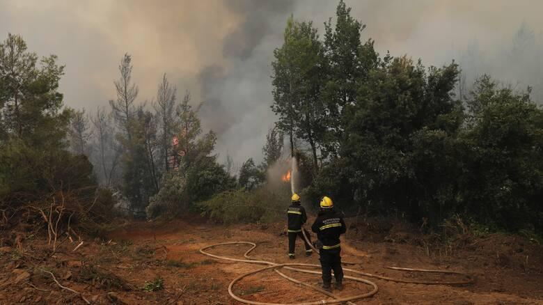 Φωτιά στο Μίστρο Ευβοίας σε δασική περιοχή - Επιχειρούν 6 αεροσκάφη και 4 ελικόπτερα