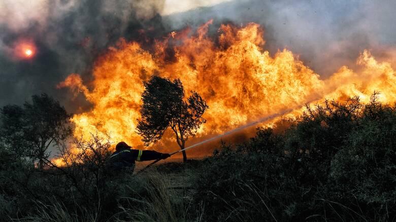 Φωτιά στη Νυμφαία Κομοτηνής - Επιχειρούν επίγεια και εναέρια μέσα