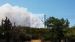 Φωτιά και στα Βίλια Αττικής - Συνεχείς εκκενώσεις οικισμών