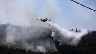 Φωτιά Βίλια: Σκληρή μάχη ανάμεσα σε Παλαιοχώρι και Θέα - Τεράστιο το μέτωπο