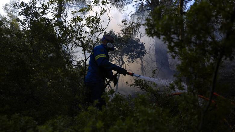 Φωτιά στο Θύμι Καρύστου Ευβοίας - Επί ποδός η Πυροσβεστική