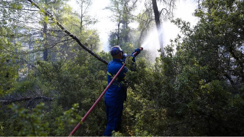 Φωτιά Βίλια: Στο μέτωπο προς Μέγαρα επικεντρώνεται η Πυροσβεστική - Μάχη με τις αναζωπυρώσεις