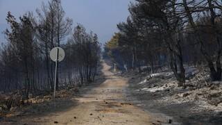 Βίλια: Οριοθετημένη η φωτιά - Περιπολίες από Πυροσβεστική, Αστυνομία και Στρατό