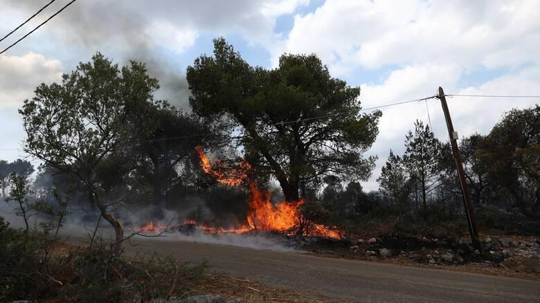 Πυρκαγιά στη Ζάκυνθο: Φλόγες κοντά στον οικισμό Αργασίου